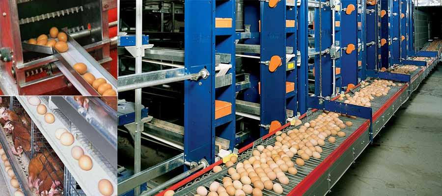 Многоступенчатая система сбора яиц