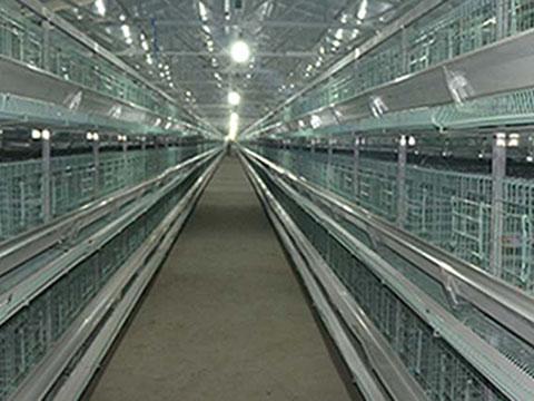 Клеточное оборудование для содержания кур несушек