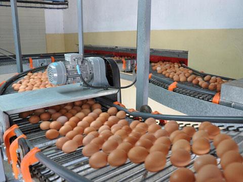 система яйцесбора