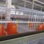 Клетка для цыплят купить