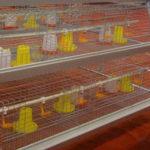 Клетки для цыплят купить