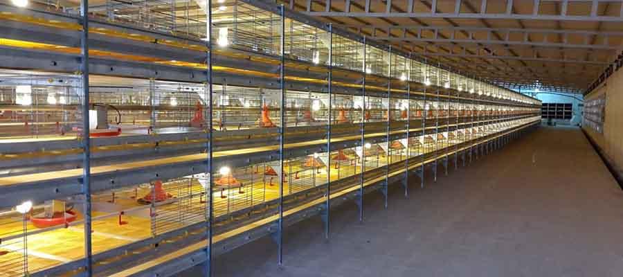Оборудование для выращивания цыплят бройлера
