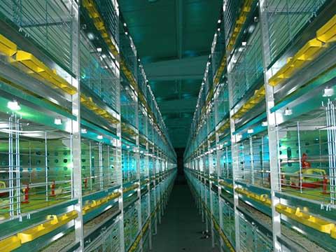Купить Livi клетки для бройлеров из Китая
