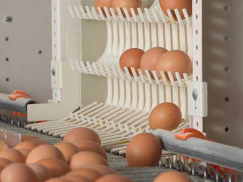 транспортёр для сбора яиц