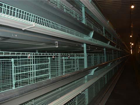 клетки для куриц несушек