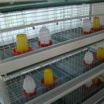 Брудер для цыплятв птицефабрике